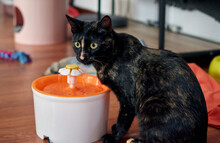 Closeup Shot Of Black Cat Drinking On A Water Fountain