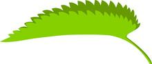 Nettle Leaf Bent In Half, Vect...