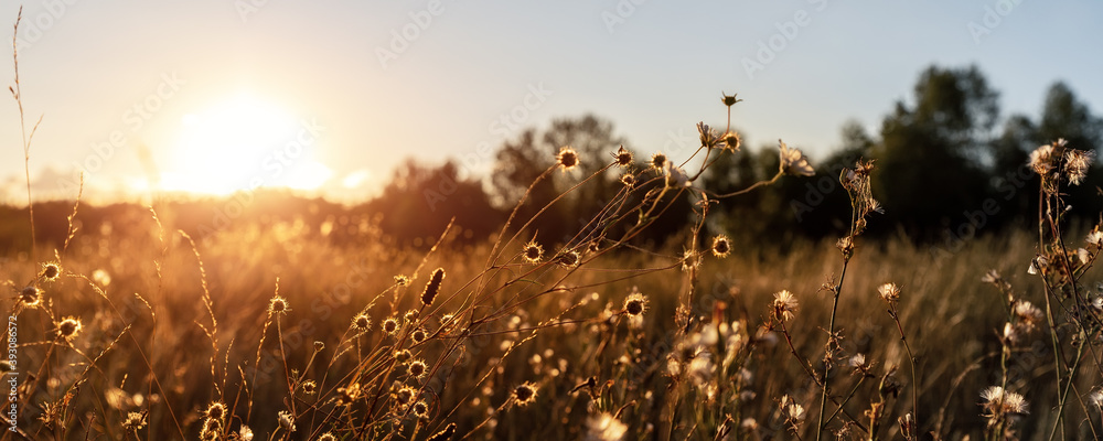 Fototapeta Abstract warm landscape of dry wildflower and grass meadow on warm golden hour sunset or sunrise time. Tranquil autumn fall nature field background. Soft golden hour sunlight panoramic countryside