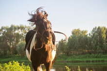 Black And White Horse Shakes H...