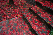 High Angle Shot Of Steps Covered In Rain And Japanese Maple Tree Leaves In A Park