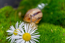 Bee On A Camomile