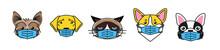Bulldog, Corgi, Labrador, Terrier And Cat In Mask