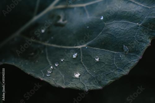Obraz na plátně Closeup shot of a green leaf