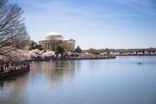 Spring Cherry Blossom Thomas Jefferson Memorial