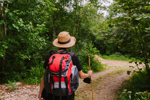Back View Of Unrecognizable Tourist With Backpack And In Hat Standing On Trail In Woods And Looking Away