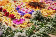 Closeup Of Fragrant Flower Bud...