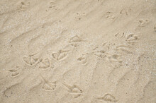 Seagull Tracks In The Sand Near Rochester, NY