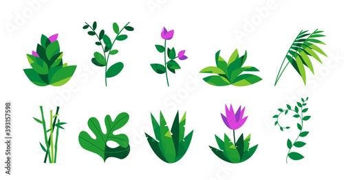 Tela Collezione botanica di piante, fiori, foglie