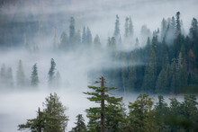 Scenic View Of Fog Over Conife...