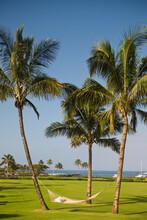 Hammock Between Palm Trees At ...