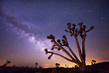 Scenic View Of Milky Way Over Joshua Trees And Desert Landscape In Death Valley National Park