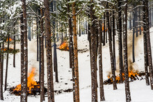 Pile Of Wood Burning In Snow Covered Pine Forest