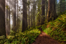 Scenic View Of Trail Passing Through Redwood National And State Parks