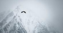 Bald Eagle Flying Over Mission...