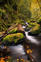 Scenic View Of Creek Flowing Through Moss Covered Boulders And Trees In Autumn Forest