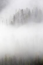 View Of Aspen Trees During Fog In Grand Teton National Park