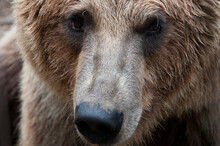 Close Up Of Alaska Peninsula B...