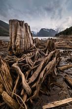 View Of Wooden Stumps In Jones Lake