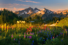 Scenic View Of Tatoosh Range W...