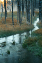 Stream Winding Through Burned Forest In Yellowstone National Park