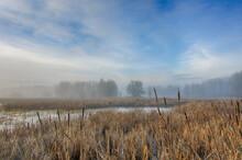 Scenic View Of Morning Fog Over Wetland In Ridgefield National Wildlife Refuge