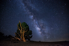 Scenic View Of Milky Way Over Bristlecone Pine In White Mountains Of California