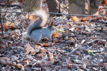 The Squirrel Is Looking For Fo...