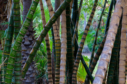 Foto Bamboo sticks in botanic garden