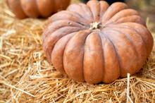 Pumpkins On A Hay Bale, Natura...