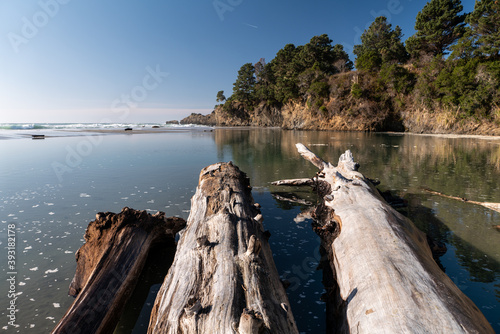 Large driftwood logs at very low tide pointing to oceanside cliff Wallpaper Mural