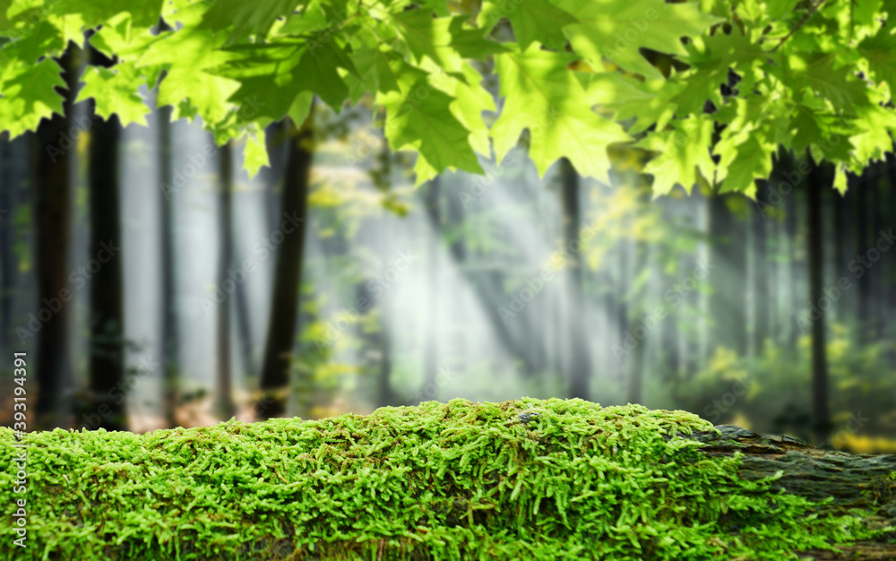 Fototapeta Green mossy log background for product display montages