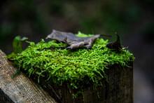 Miniature Undergrowth