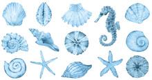Watercolor Sea Collection - Blue Shells, Seahorse, Sea Star. Original Hand Drawn Illustration In Vintage Style