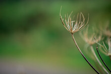 Photo Of A Wild Dried Flower ...