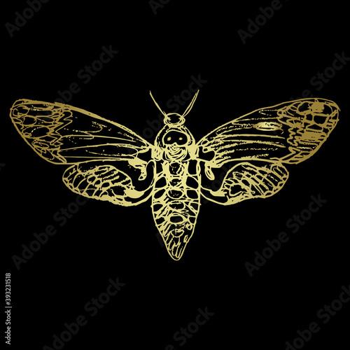 Obraz na plátně African death's head hawkmoth butterfly