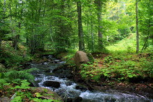 Densely Forested Area With A Rocky Stream Of Water Flowing Through A Lush Summer Vegetation