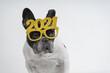 Cute little bulldog wearing a 2021 glasses