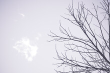 Silhouette Of Leafless Tree Branches Against A Foggy Sky With Space For Your Text