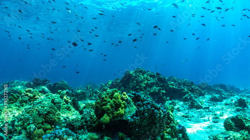 underwater scene with coral reef and fish. Fotobehang