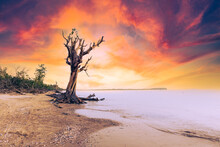 Tree On The Beach At Sunset.