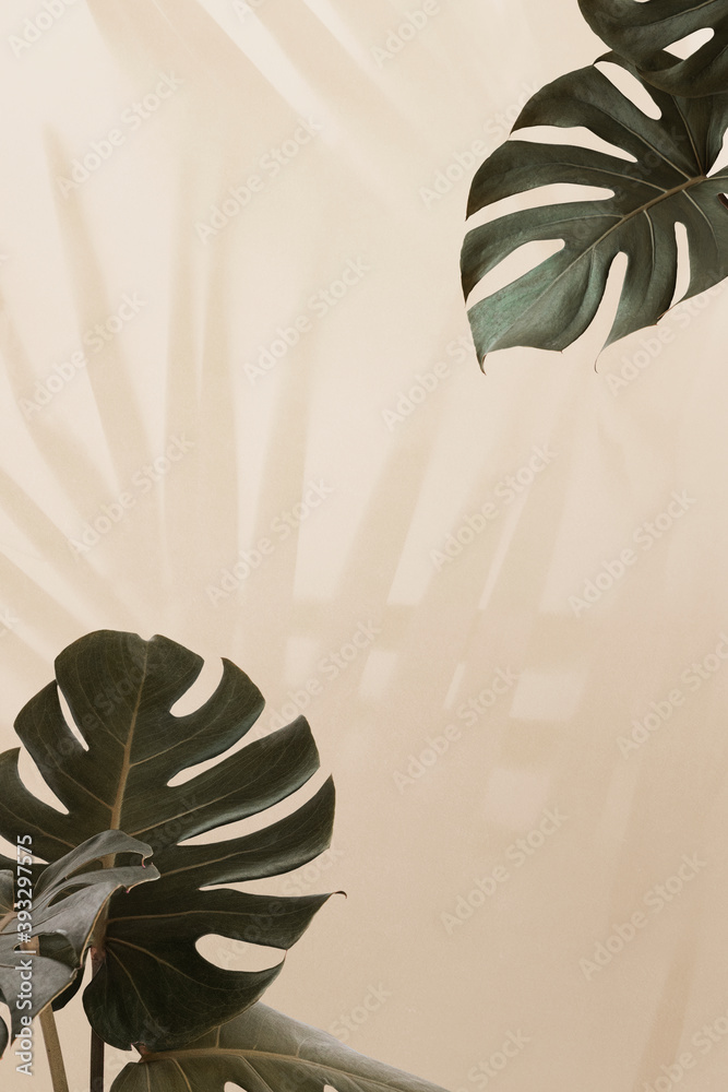 Fototapeta Tropical Monstera leaves with palm leaves shadow