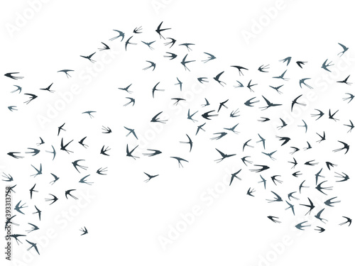 Fotografia Flying swallow birds silhouettes vector illustration