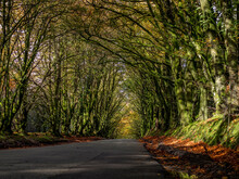 A Devon Country Road In Autumn...
