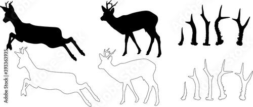 Fotografie, Obraz silhouette and outline of Roe deer (Capreolus capreolus), vector on white backgr