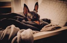Dog Hates Home Confinement