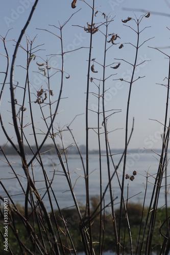 Sucha bezlistna roślinność nad brzegiem rzeki jesienią - fototapety na wymiar