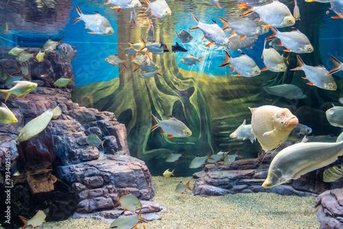 Poissons tropicaux dans un aquarium Fotobehang