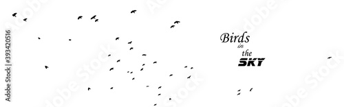 Stampa su Tela A flock of flying birds. Vector illustration