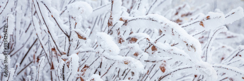 Foto Snow and rime ice on the branches of bushes